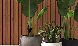 Outdoor Setting Plant Pot Collection Idea